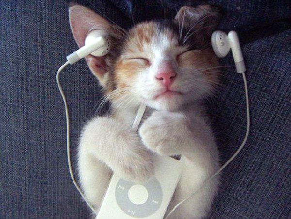 Music for cats | Bibliolore