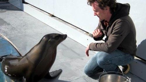 sea lion ronan