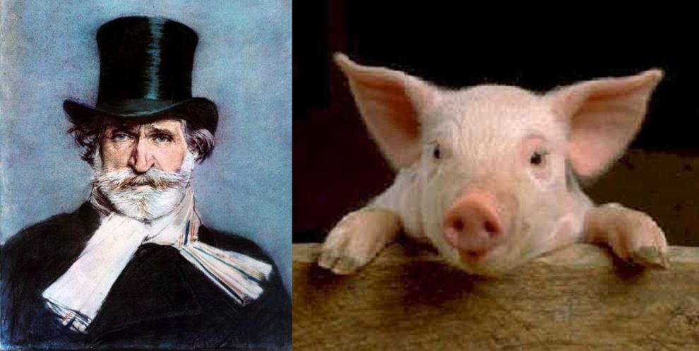 verdi-pig