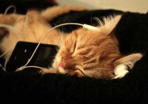 cat music 2