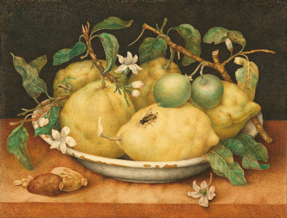 Giovanna_Garzoni_Still_Life_with_Bowl_of_Citrons
