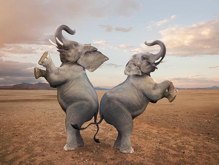 Dancing Elephants In Ancient Rome Bibliolore